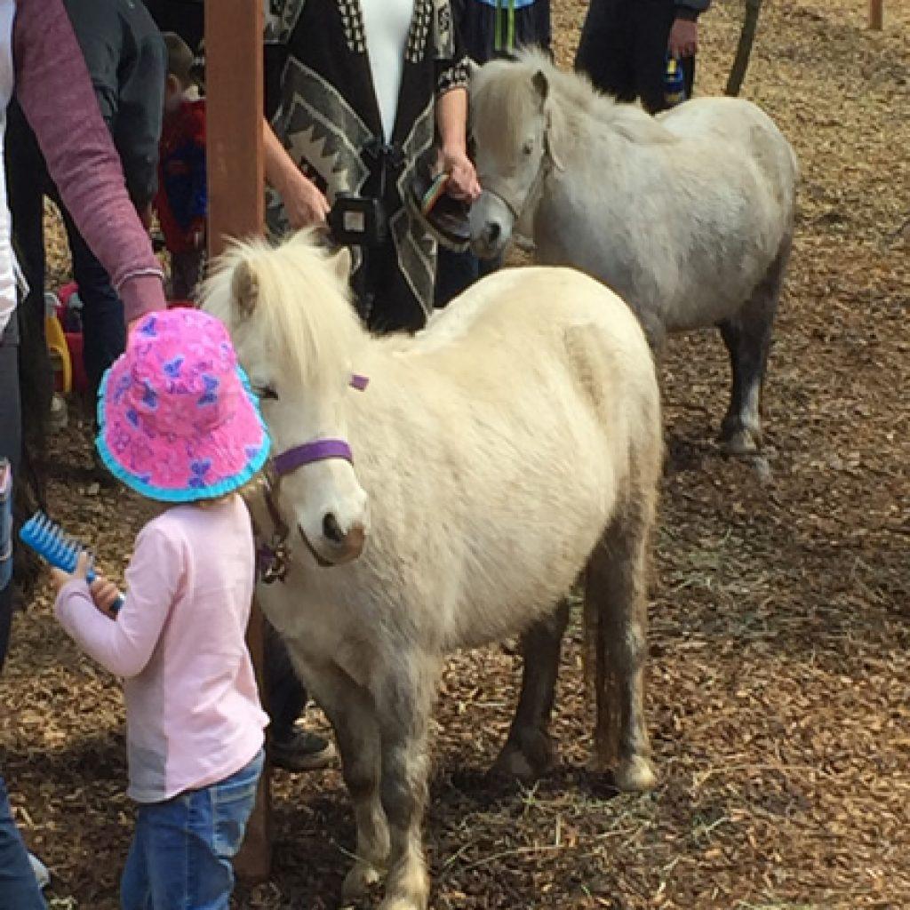 Your Pony Birthday Party